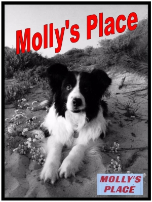 Molly's Place
