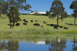 Magnificent 5 bed pet friendly holiday home, sleeps 10 in Wang Wauk NSW